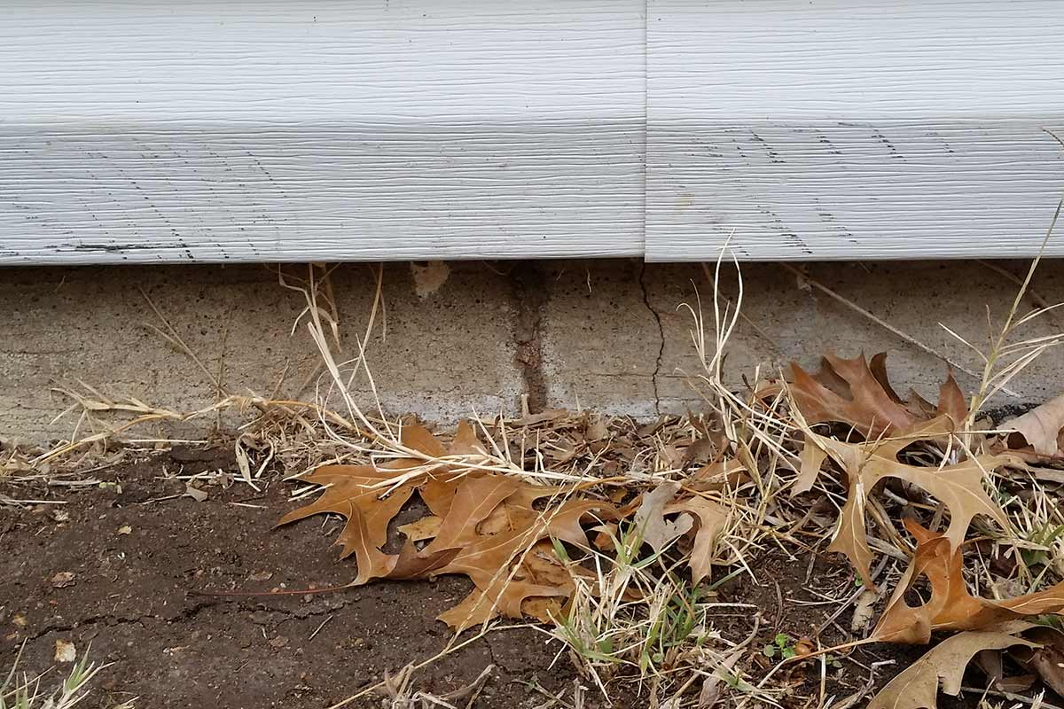 Termite Tube - Betts Pest Control - Termite Control
