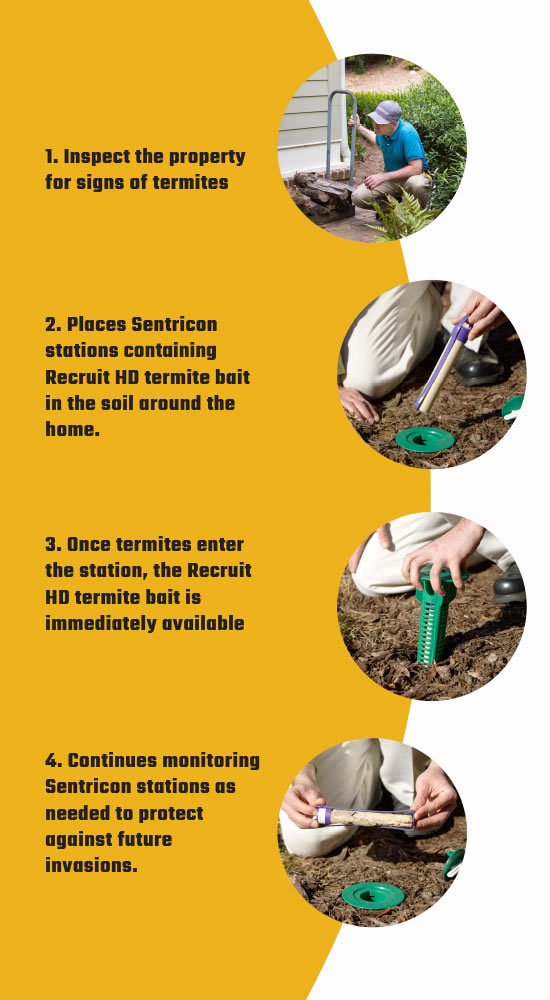 infographic explaining how termite inspection works